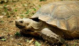 乌龟是怎么交配的过程